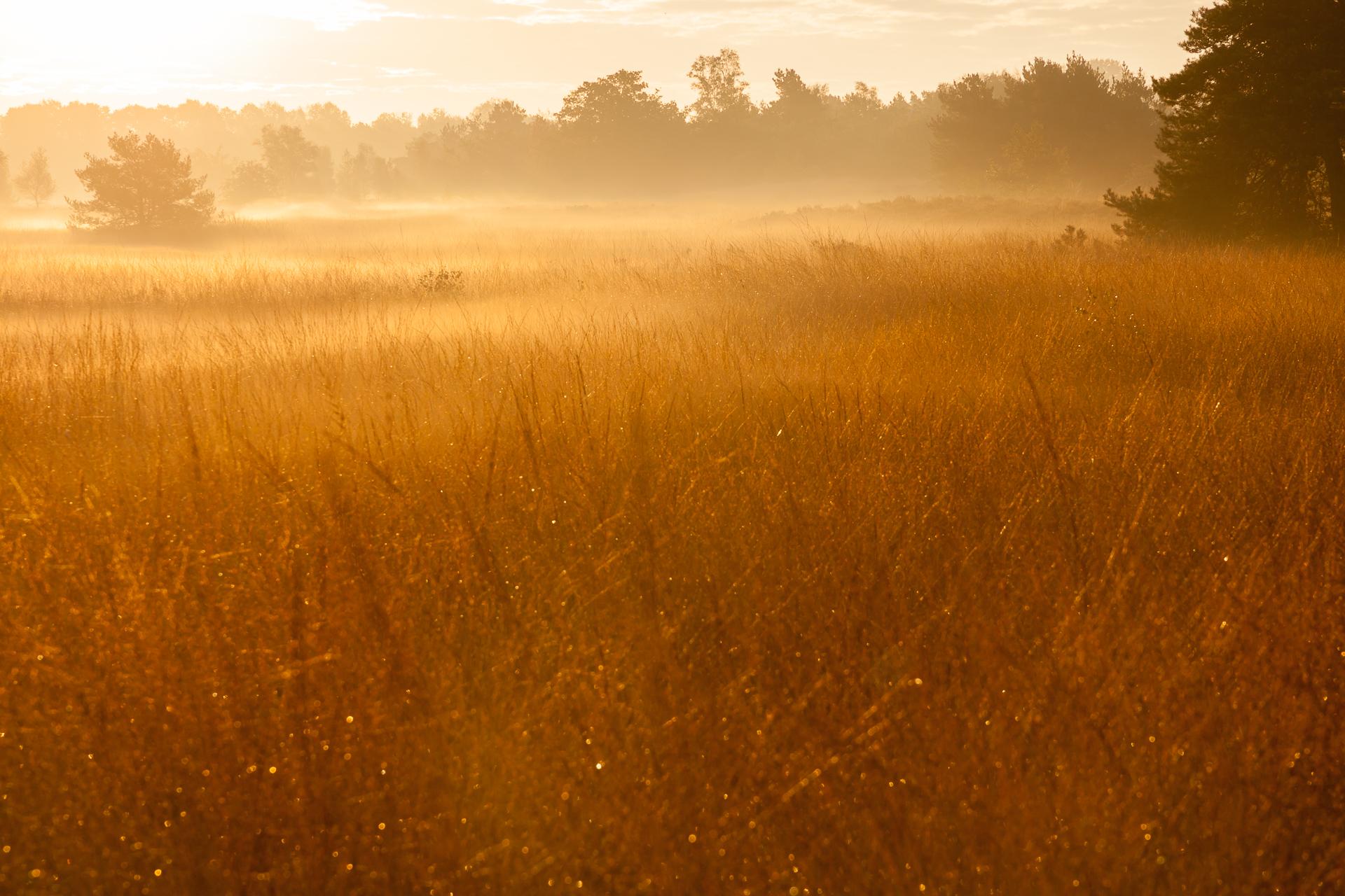 Landschapsfotografie mist met zonsopgang