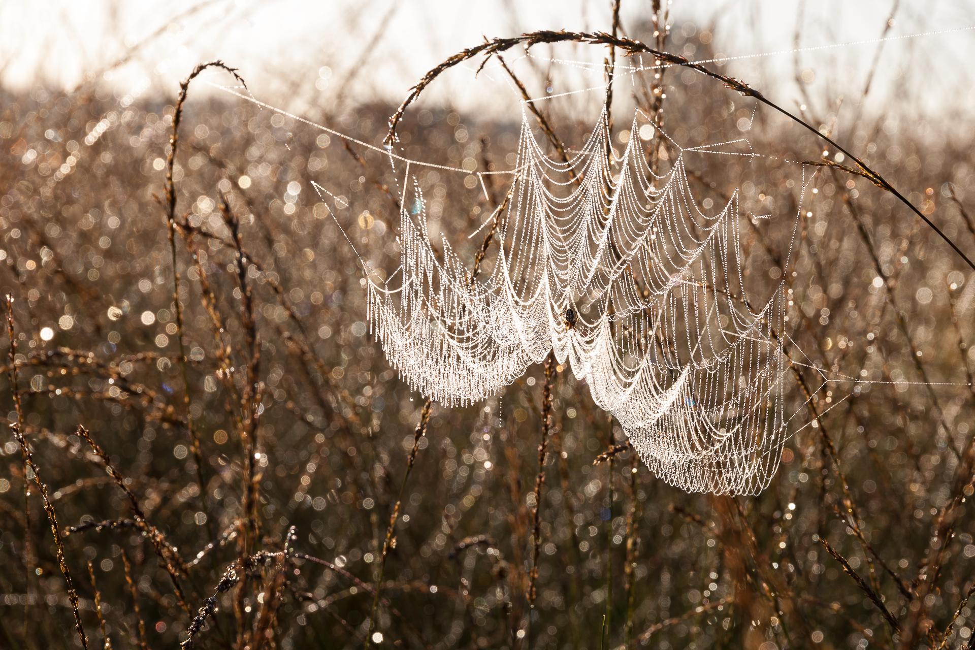 Landschapsfotografie Spinnenweb