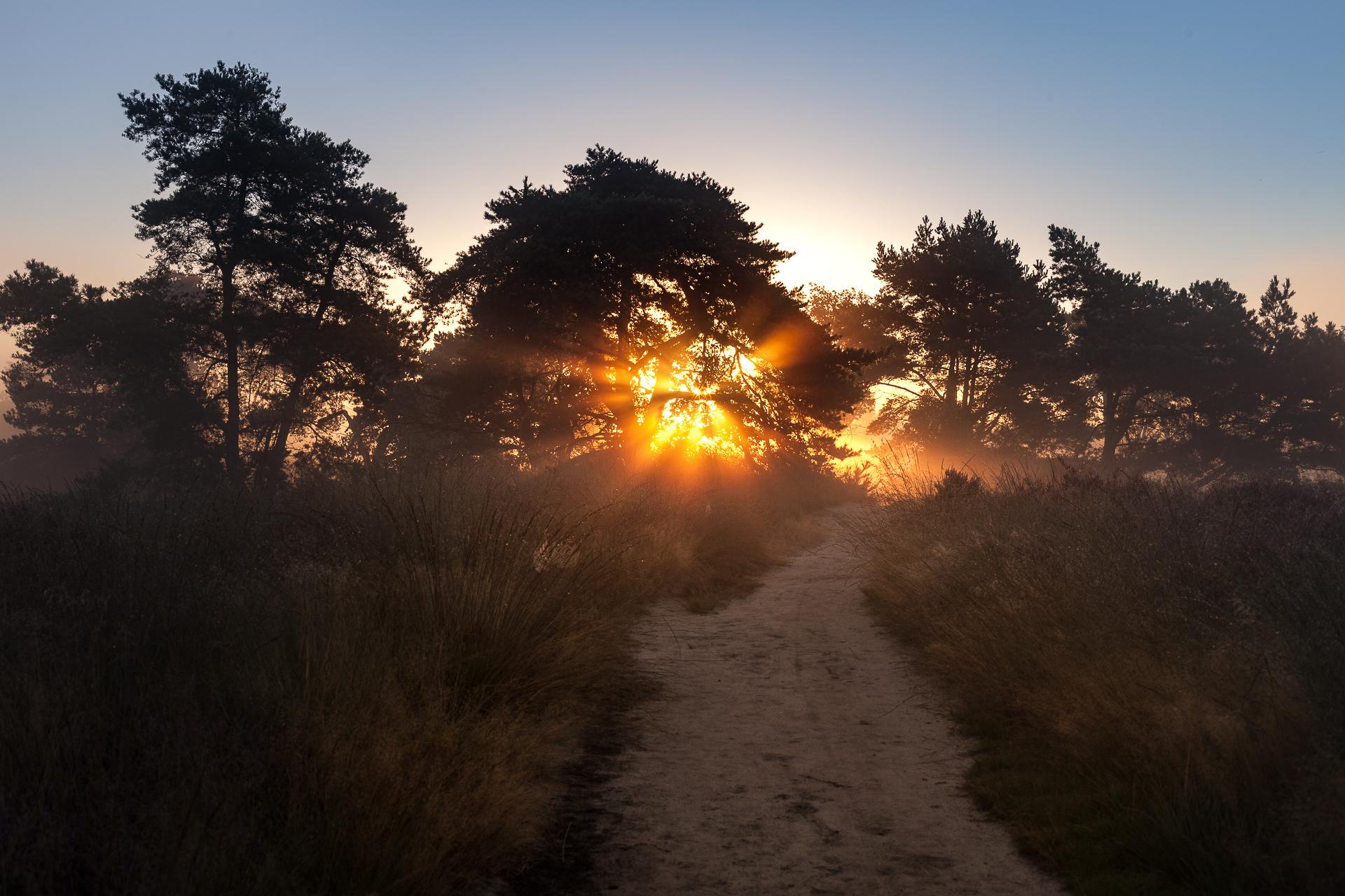 Landschapsfotografie zonlicht door bomen
