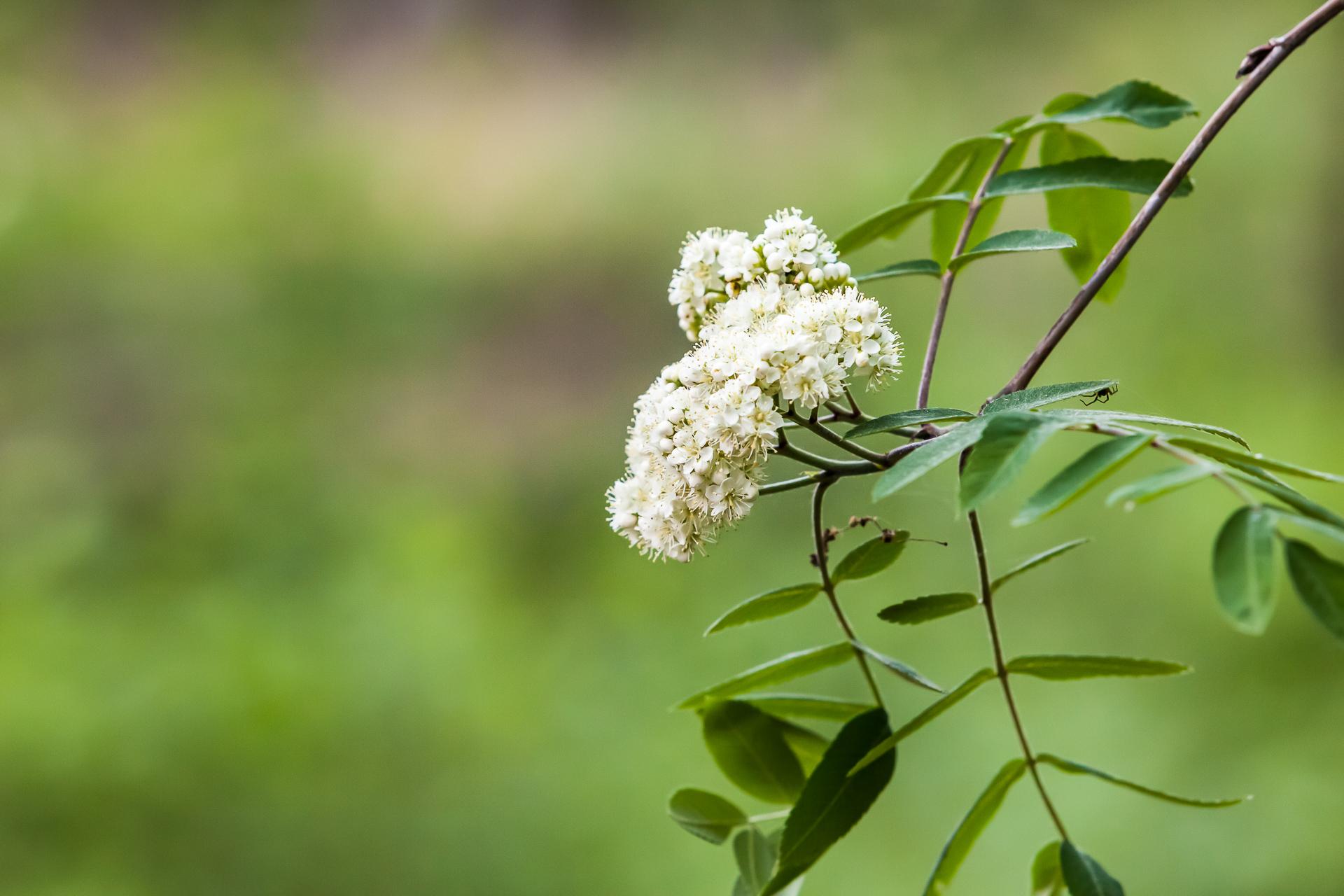 Landschapsfotografie bloem